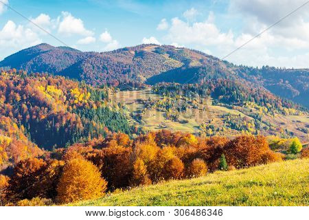 Sunny Autumn Afternoon Mountain Scenery. Trees In Fall Foliage On The Hillside. Green Grassy Meadow.