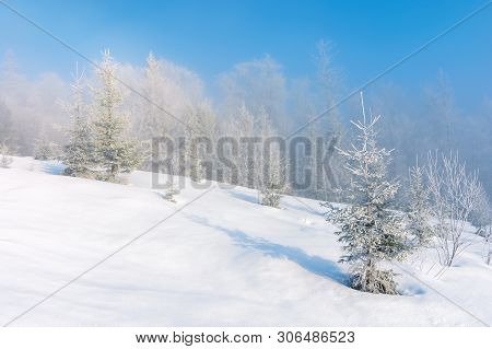 Winter Scenery With Trees In Hoarfrost On Hillside. Hazy Weather On A Bright Sunny Morning With Clea