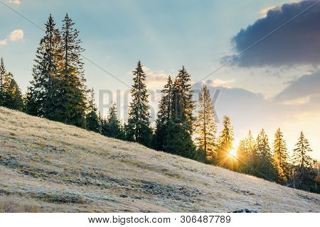 Rising Sun Behind The Spruce Trees On The Hill. Sunny Morning In Apuseni Natural Park, Romania. Beau