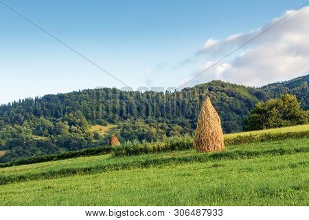 Haystacks On A Grassy Hill. Traditional Rural Scenery, Carpathian Countryside In Mountains. Calm Sun