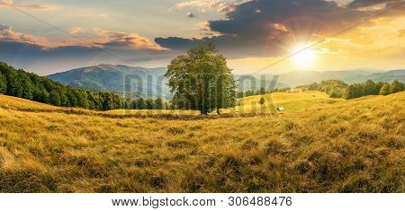 Beech Tree On The Meadow In Mountains At Sunset. Forest Around The Slope. Wonderful Summer Scenery O