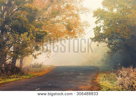 Asphalt Country Road On A Misty Autumn Morning. Scenery With Trees In Colorful Fall Foliage