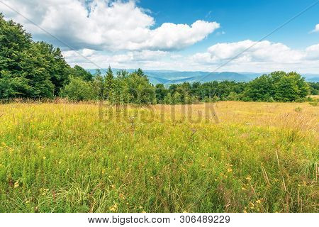 Grassy Glade On The Edge Of The Forest. Lovely Summer Scenery On A Bright Sunny Day.  Beautiful Clou