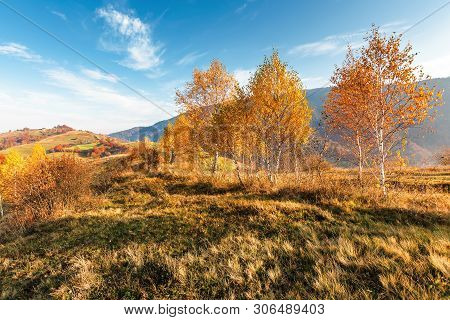 Birch Trees On The Meadow In Mountains. Beautiful Autumn Landscape. Trees In Lush Orange Foliage. Vi