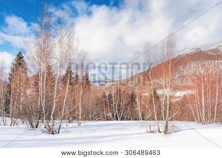 Birch Forest In Winter. Leafles Plants Stay Frozen On A Snowy Meadow. Wonderful Landscape In Mountai