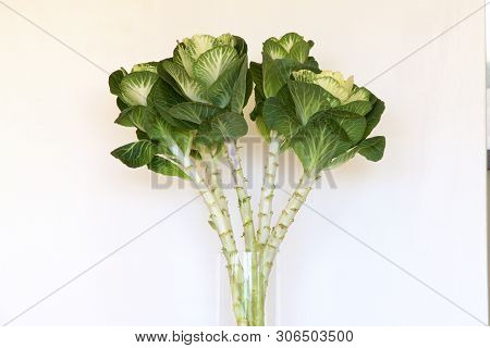 A Glass Vase With Fresh Ornamental Kale.