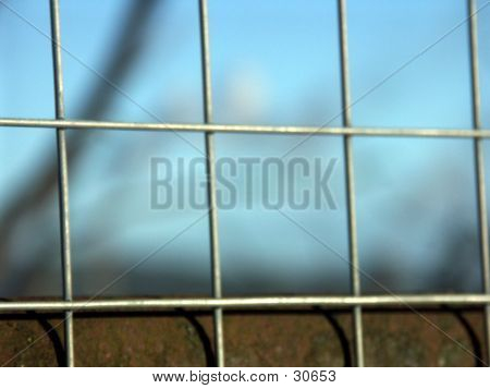 Fence In Focus