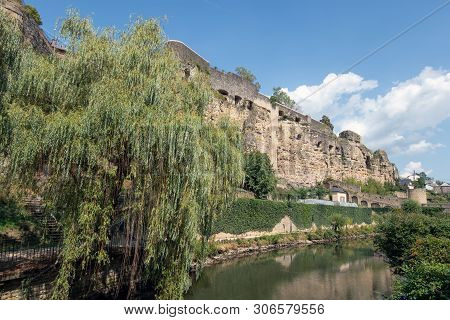 Weeping Willow Along Alzette River In Luxembourg City And View At Medieval Fortification Wall