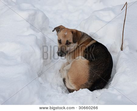 Stray dog with sad eyes on snow poster