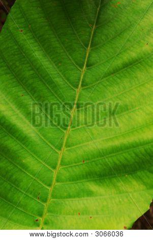 The greenest leaf ever in closeup macro poster