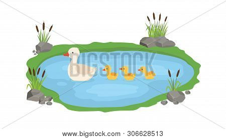Vector Illustration Of A Duck And Ducklings. Mother Duck Swims In The Lake With Small Ducklings Arou