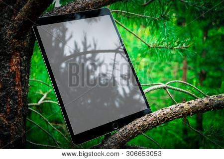 Digital Tablet Computer With Blank Screen In A Park Background, Pine Thee Brunches. Mobile Device Mo