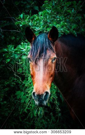 A Portraiture Of A Sorrel Horse Head In A Green Bushes, Countryside Landscape.