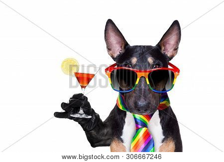 Crazy Funny Gay Pitbull Dog Proud Of Human Rights ,sitting And Waiting, With Rainbow Flag Tie  And S