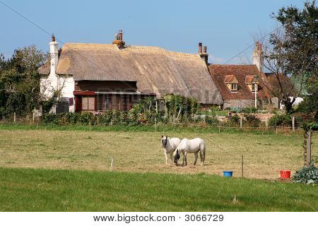 Thatched Cottage And Horses In Kent