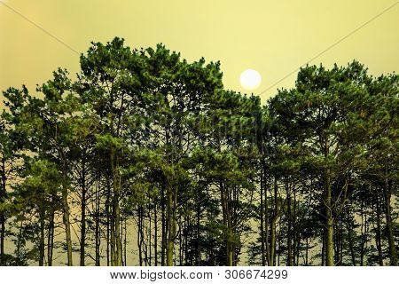 Green Pine Tree With Sunset Sky, Shilhouette Green Tree In Dawn Time On The Mountain, Phu Tub Berk M