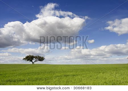 Spring landscape with green field and a blue sky