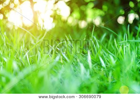 The Morning Sun Shines On The Green Lawn In Front Of The House, Natural Background, Blur Background,