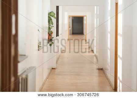 House Plant Inside A Long Empty Hallway, In An Old Building With White Freshly Painted Walls And Par