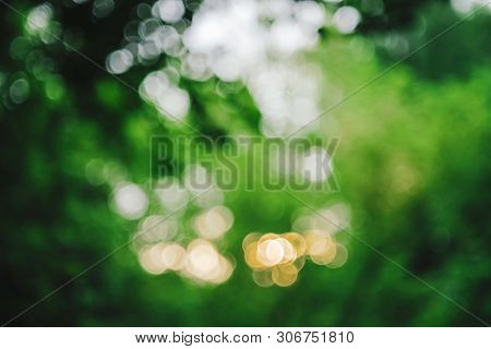 Bokeh Of Vivid Leaves Of Trees In Sunlight. Natural Green Background. Blurred Rich Greenery With Cop