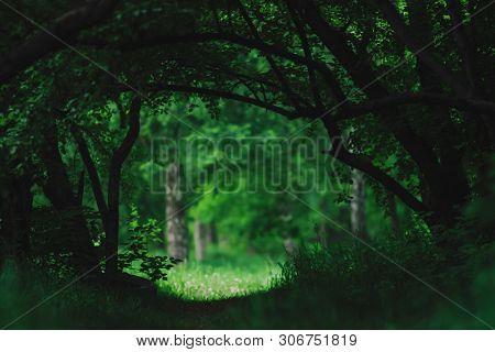 Atmospheric Dark Green Landscape With Fancy Tree Branches. Dark Woodland Vegetation Tunnel. Sunny Me