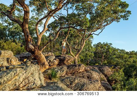 A Woman Stands Under Large Gum Trees Growing On The Cliff Edge Of The Mountain Gully.  She Is Lookin