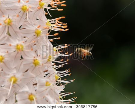 Bee Pollinating Garden Flowers Closeup View From The Side