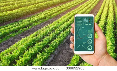 A Hand Is Holding A Smartphone With Infographics On The Background Of A Carrot Plantation. Agricultu