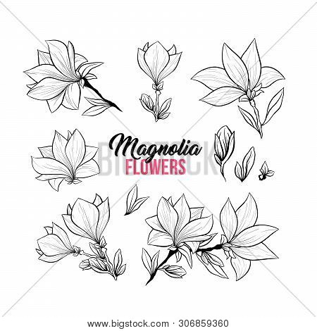 Magnolia Flower Bouquets In Blossom, Beautiful Home Decor And Interior Design, Isolated Illustration