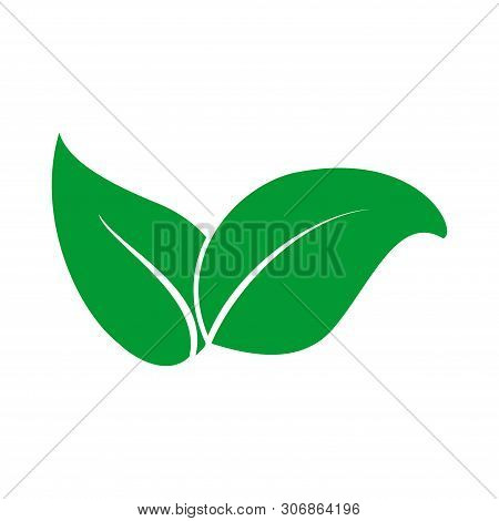 Leaf Icon Vector Isolated On White Background. Leaf Icon Simple Sign. Leaf Icon Image, Leaf Icon Tre