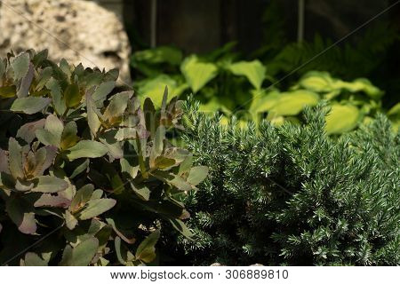 Green Plants In The Garden Against The Background Of The Stone. An Artificial Combination Of Shades