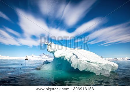 Three black-legged kittiwakes sit on a small iceberg, known as a Bery Bit, is Isfjorden, Svalbard, a Norwegian archipelgo between mainland Norway and the North Pole.