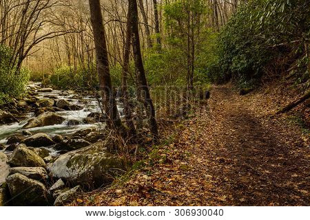 Big Creek Trail In Great Smoky Mountains National Park In North Carolina, United States