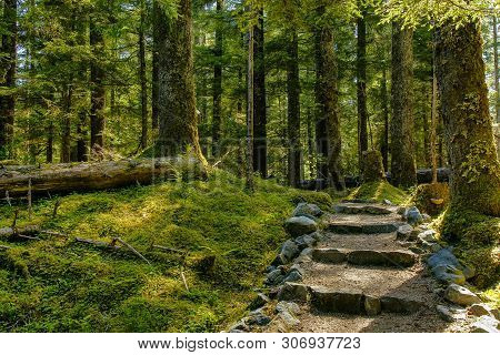 The Forest Loop Trail In The Bartlett Cove Area Of Glacier Bay National Park In Alaska, United State