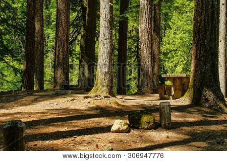 Ohanapecosh Campground In Mount Rainier National Park In Washington, United States