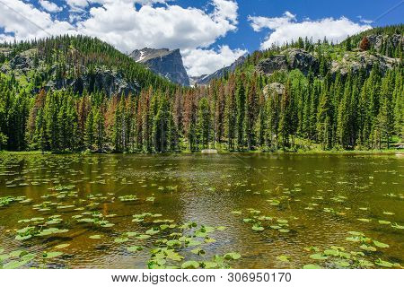Nymph Lake In Rocky Mountain National Park In Colorado, United States