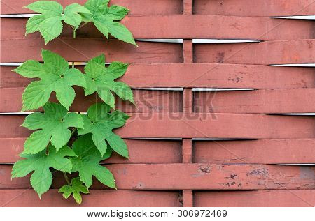 Stock Photo Fresh Spring Green Plant Over Wood Fence Background
