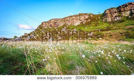 Cottongrass Below Great Wanney Crag, On The Edge Of Northumberland National Park, Is A Remote Escarp
