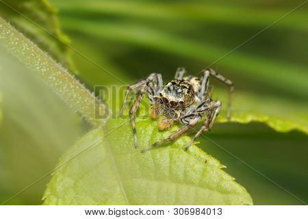 Close up shot of jumping spider