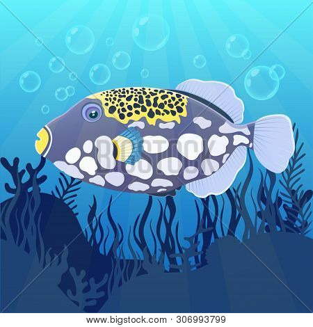 Triggerfish Fish Clown At The Bottom Of Sea With Algae, Flat Realistic Drawing. Cute Painted Colorfu