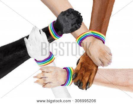 Group Or Team Of Hand Shaking Dog Animal Paws With Lgbt Rainbow Gay Arm Wrist Band Flag , Isolated O
