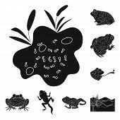 Vector design of fauna and reptile icon. Collection of fauna and anuran vector icon for stock. poster