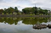 Wide angle view of a lake in Nara Japan with turtles in the front and pagoda of Kofuku-ji temple in background poster