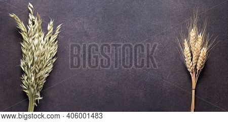 Bunch or bundle of oat and wheat at table. Natural food concept at stone rustic background texture. Flat lay panoramia or panoramic top view