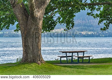 Recreational Area Under The Crown Of Big Chestnut Tree With The Lake Overview