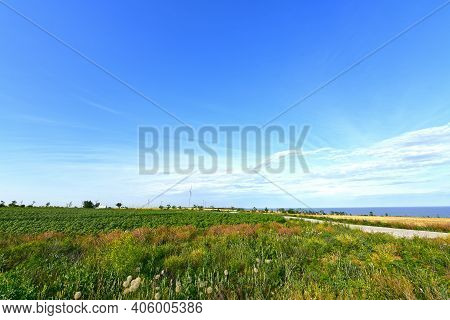 Sunflower And Wheat Fields On The Background Of The Sea Of Azov.