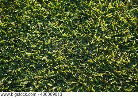 Green Grass Background Texture From Top View In Football Field. Green Grass Texture Background Top V