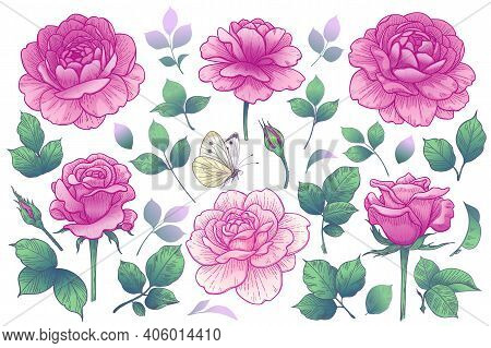 Blooming Rose Flowers Heads, Buds And Leaves Isolated On White Background. Summer Collection With Pi