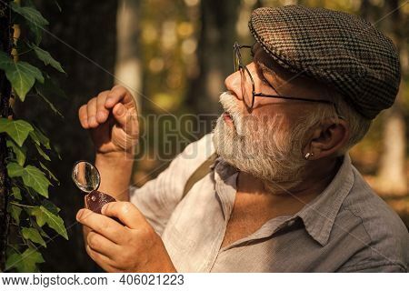 Examine With Magnifying Glass. Magnification And Investigation. Back To Nature. Old Person In Woods