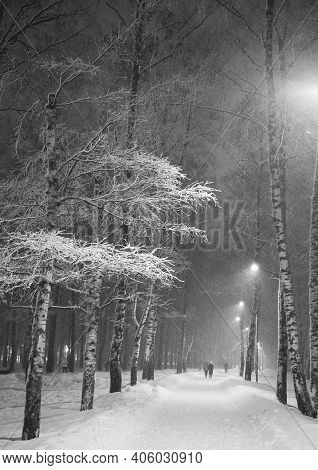 Winter Evening Snowstorm In The City Birch Park At The End Of January